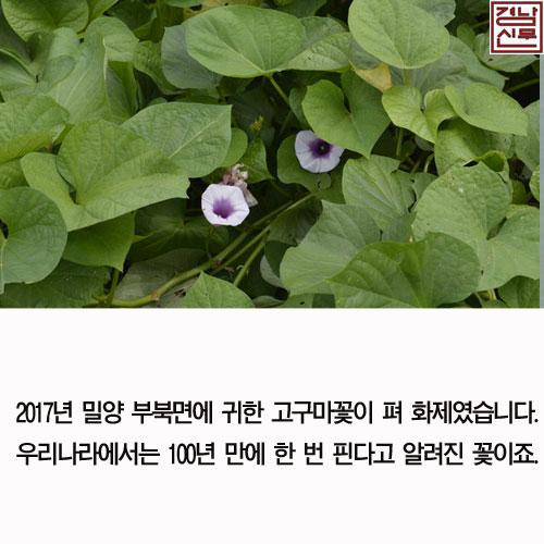 길조동식물4.jpg