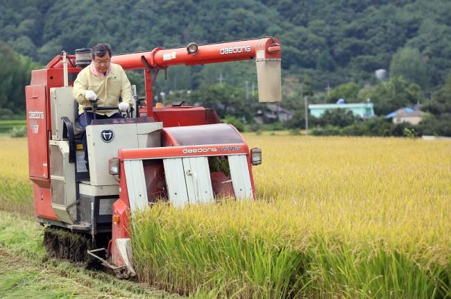 0910 밀양대표 브랜드쌀(밀양아라리쌀)수확 실시(1).JPG