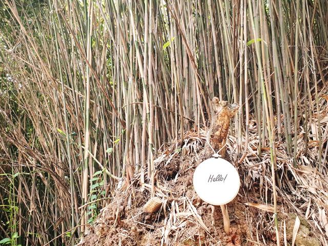 대나무 숲 군데군데 주민들의 따뜻한 손길이 느껴진다.