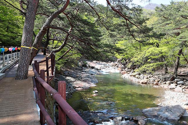 산청 대원사 계곡길 봄 오는 소리 (6).jpg