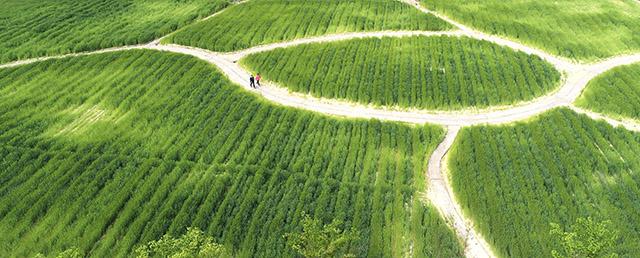 청보리밭 산책.jpg
