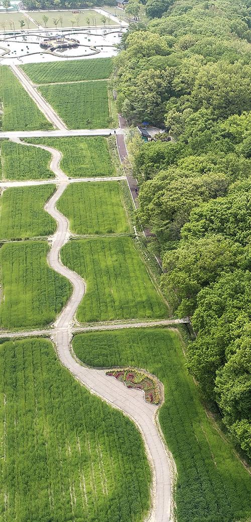 상림공원 청보리밭.jpg