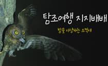 [탐조여행 지지배배] 밤을 사냥하는 소쩍새