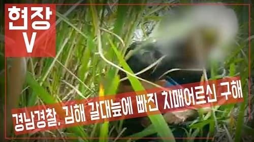경남경찰, 김해 갈대늪에 빠진 치매 어르신 구해