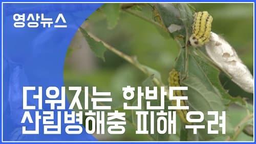 더워지는 한반도 산림병해충 피해 우려