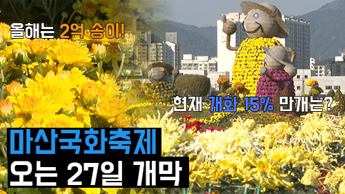 마산국화축제 오는 27일 개막, 11월 초 만개 예상