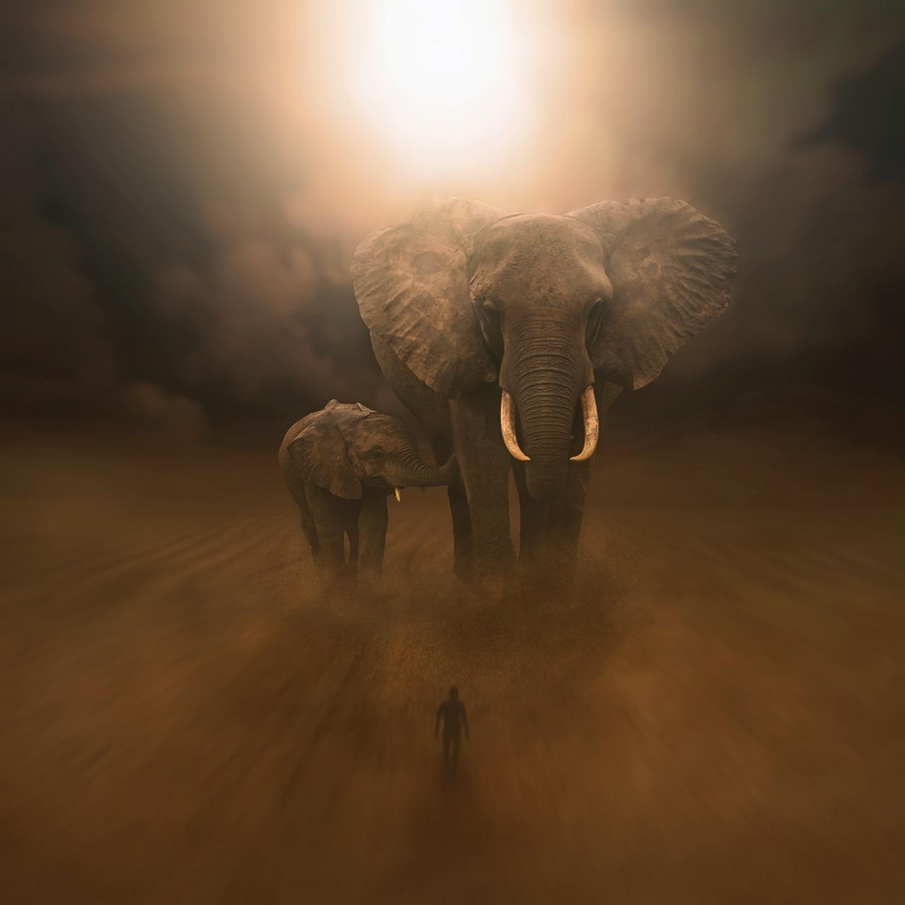 [일상탐독2] (9) 코끼리 그늘로부터 잔디/이제니