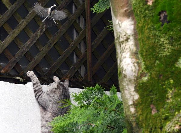 박새 놓친 고양이