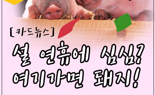 [카드뉴스]설 연휴 여기가면 돼(되)지!