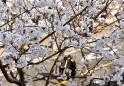 [포토뉴스] 코로나에 뺏긴 봄… 그래도 꽃은 핀다
