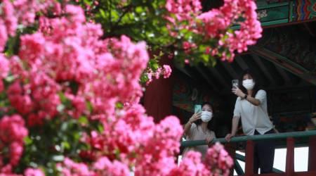 [포토뉴스] 함양 학사루에 배롱나무꽃 활짝